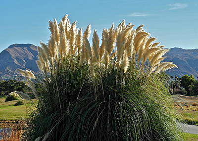 Photograph - Pampas Grass Plant by Kirsten Giving