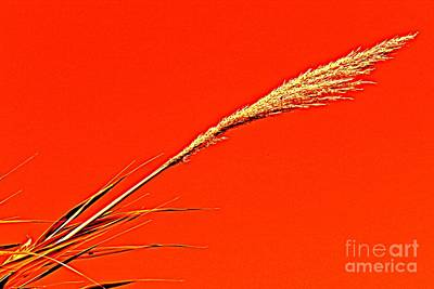 Modern Photograph - Pampas Grass Red by Clare Bevan