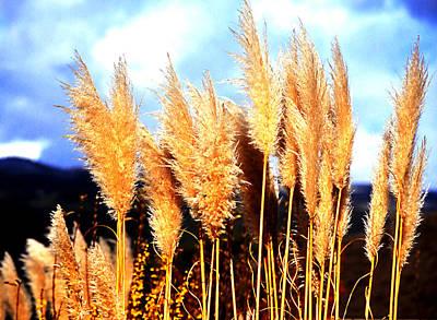 Photograph - Pampas Grass by Robert  Rodvik