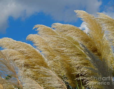 Photograph - Pampas Grass Whisper by Michael Hoard