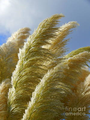 Photograph - Pampas Grass Whispers  by Michael Hoard