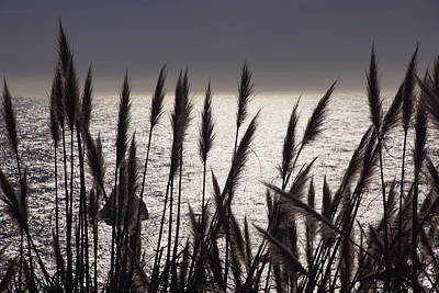 Photograph - Pampas Ocean by Michael Courtney