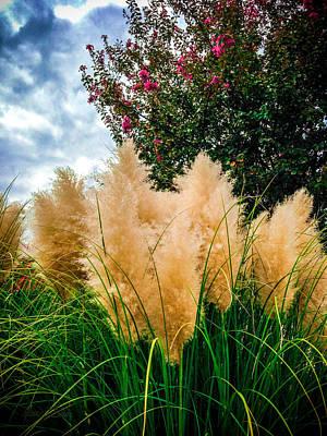 Pampus Photograph - Pampus Grass Crape Myrtle Clouds by Robert J Sadler