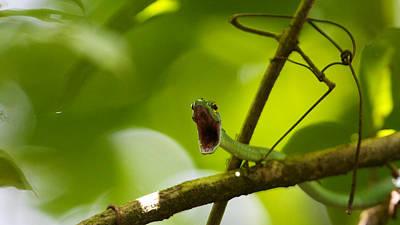 Photograph - Panacam Green Snake by David Beebe