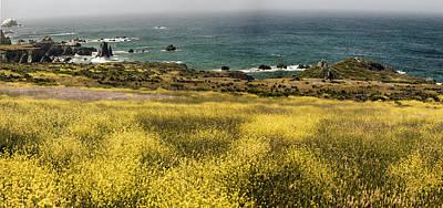 Photograph - Panarama Spring On Califronia Coast By Denise Dube by Denise Dube