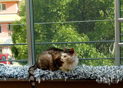 Devon Rex Cat Photograph - Pancho Is A Devon Rex by Al Bourassa