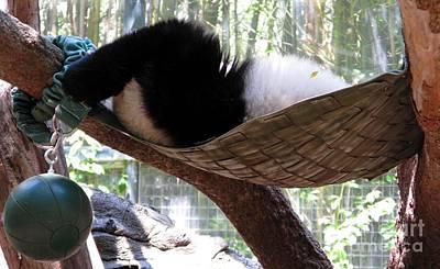 Photograph - Panda Baby Nap. San Diego Zoo Series. by Ausra Huntington nee Paulauskaite