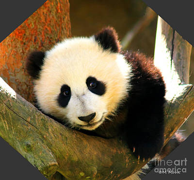 Photograph - Panda Bear Baby Love by Tap On Photo