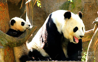Photograph - Panda Bear Mommy Talk by Tap On Photo