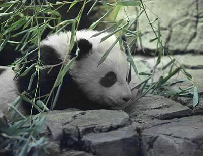 Panda Cub Bao Bao Art Print