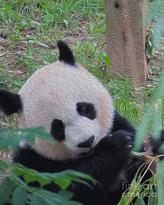 Photograph - Panda  by Dawn Gari