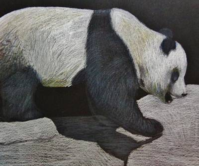 Colored Pencil Drawing - Panda Drawing by Savanna Paine
