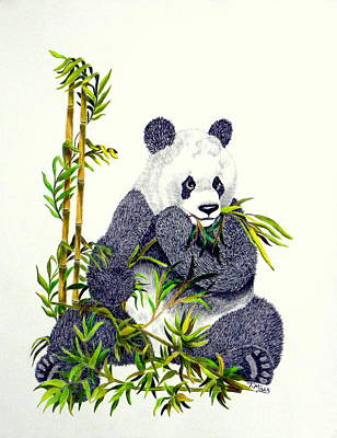 Drawing - Panda  by Terri Mills