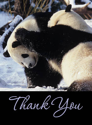 Photograph - Panda Thank You Cards by Chris Scroggins