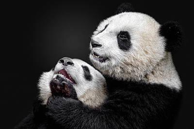 Panda Wall Art - Photograph - Pandas by Alessandro Catta