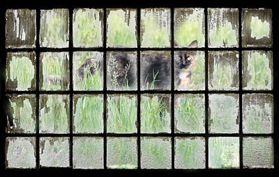 Panes Of Calico Art Print