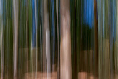 Unreal Photograph - Panning Forest by Stelios Kleanthous