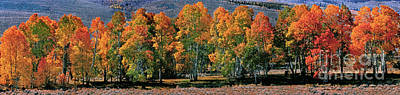 Photograph - Panorama Aspens Fall Eastern Sierras California by Dave Welling