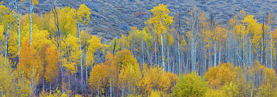 Multihued Photograph - Panorama Aspens Winthrop Western by Tom Norring
