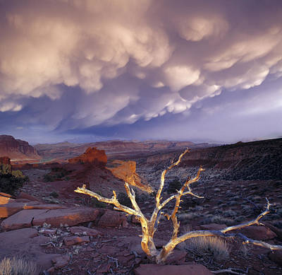 Capitol Reef National Photograph - Panorama Point by Leland D Howard