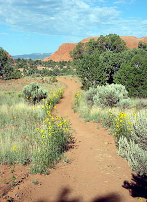 Photograph - Panorama Trail by Susan Woodward