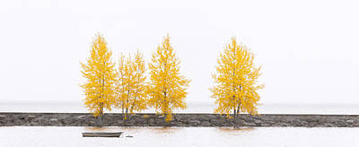 Photograph - Panorama Tree by U Schade