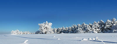 Photograph - Panorama With Trees Covered With Snow In A Sunny Winter Day by Vlad Baciu