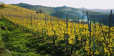 Winemaking Photograph - Panoramic View Of Vineyards, Peidmont by Panoramic Images