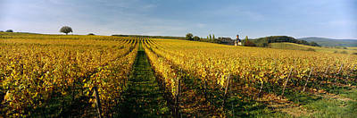 Winemaking Photograph - Panoramic View Of Vineyards, Schloss by Panoramic Images