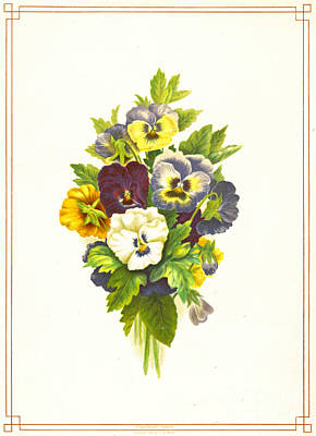 1874 Photograph - Pansies 1874 by Padre Art