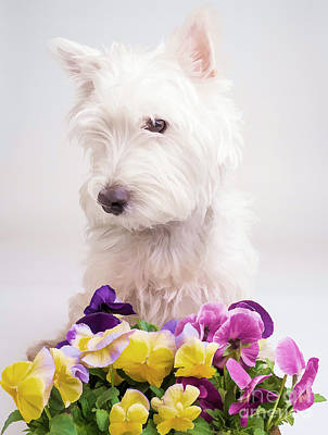 Puppy Photograph - Pansies by Edward Fielding