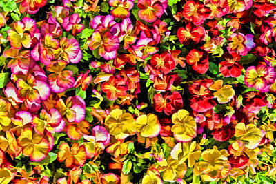Photograph - Pansies Galore by Jeanne May