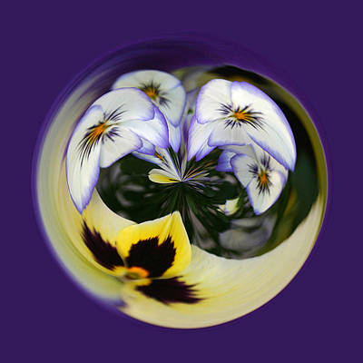Photograph - Pansy Ball by Jim Baker