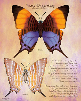 Painting - Pansy Daggerwing Butterfly by Tammy Yee