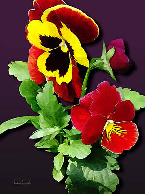 Pansy Photograph - Pansy Family by Susan Savad
