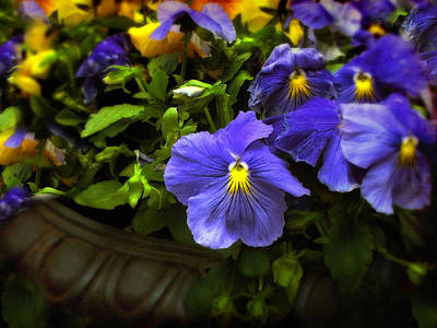 Planter Wall Art - Photograph - Pansy Planter by Jessica Jenney