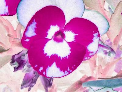 Photograph - Pansy Power 05 by Pamela Critchlow
