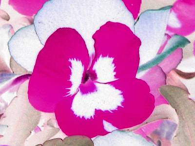 Photograph - Pansy Power 06 by Pamela Critchlow