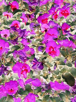 Photograph - Pansy Power 08 by Pamela Critchlow