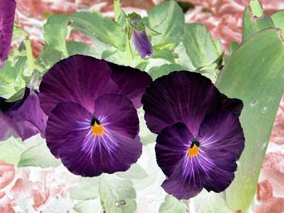 Photograph - Pansy Power 12 by Pamela Critchlow