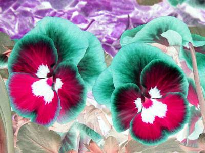 Photograph - Pansy Power 27 by Pamela Critchlow
