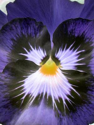 Photograph - Pansy Power 34 by Pamela Critchlow