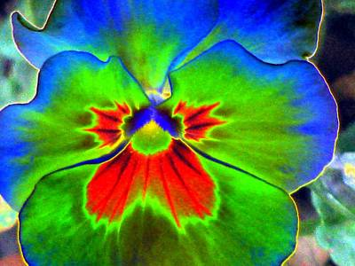 Photograph - Pansy Power 39 by Pamela Critchlow