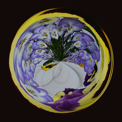Photograph - Pansy Series 503 by Jim Baker