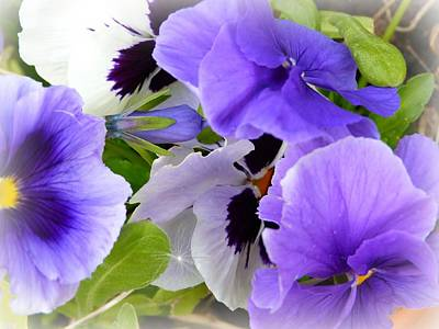 Photograph - Pansy's by Debra Collins