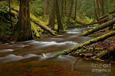 Art Print featuring the photograph Panther Creek Landscape by Nick  Boren