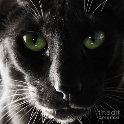 Photograph - Panther Eyes by Michael Canning