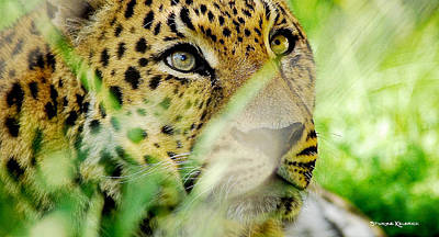 Photograph - Panther Of Love by Stwayne Keubrick