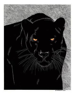 Wall Art - Drawing - Panther by Paul Shafranski