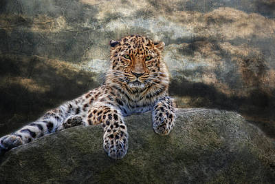 Panthera Photograph - panthera II by Joachim G Pinkawa